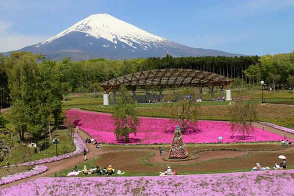 富士山樹空の森