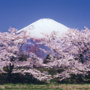 世界文化遺産「富士山」の画像イメージ