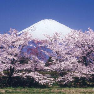世界文化遺産「富士山」イメージ