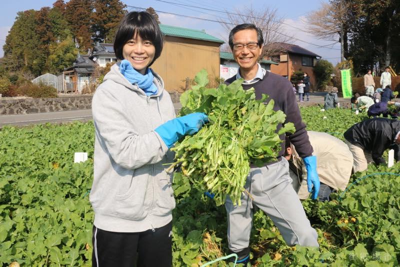 水かけ菜収穫体験