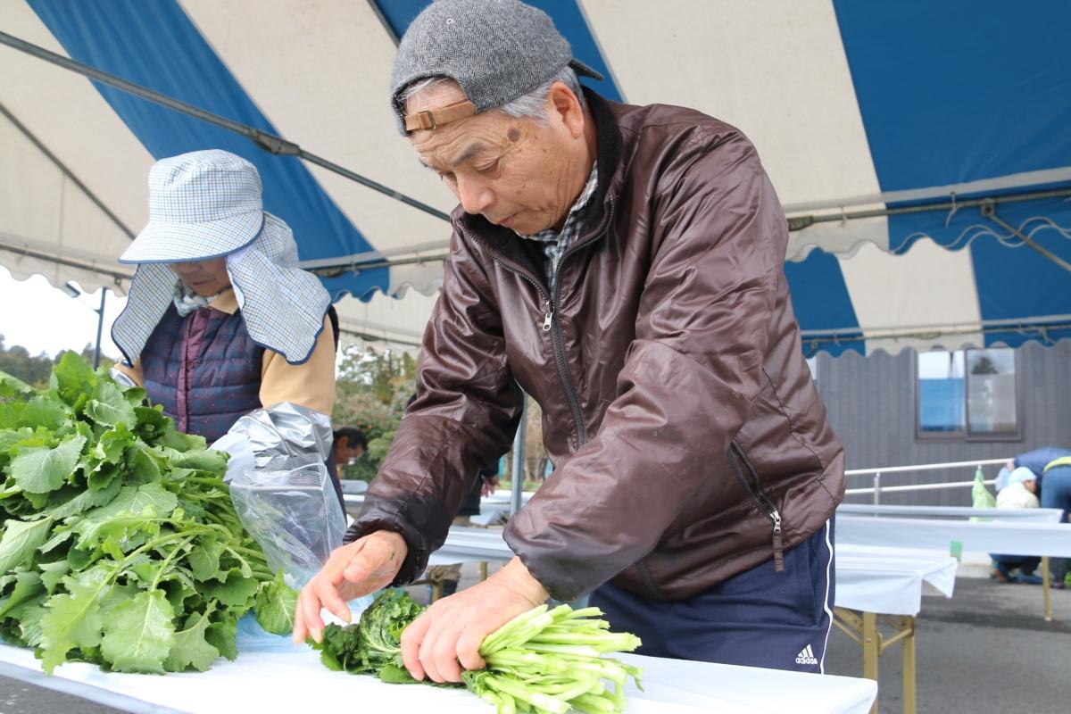 水かけ菜収穫・漬け込み体験