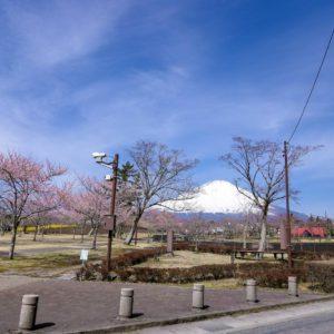 4/5桜公園