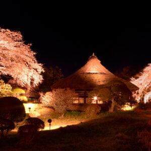 今野 剛典さん「夜桜の宴」