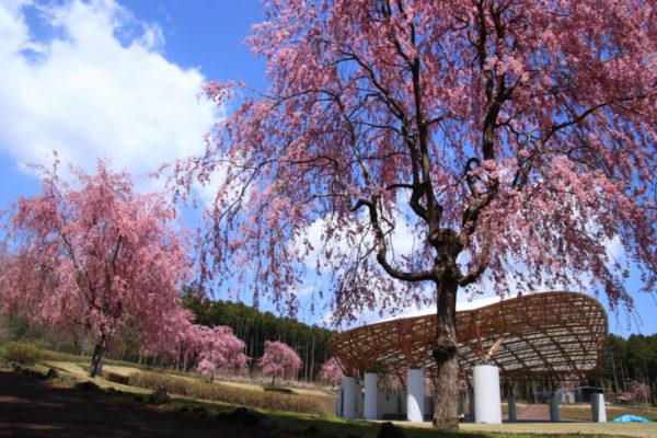 石井 良二さん「樹空の森に春が来た」