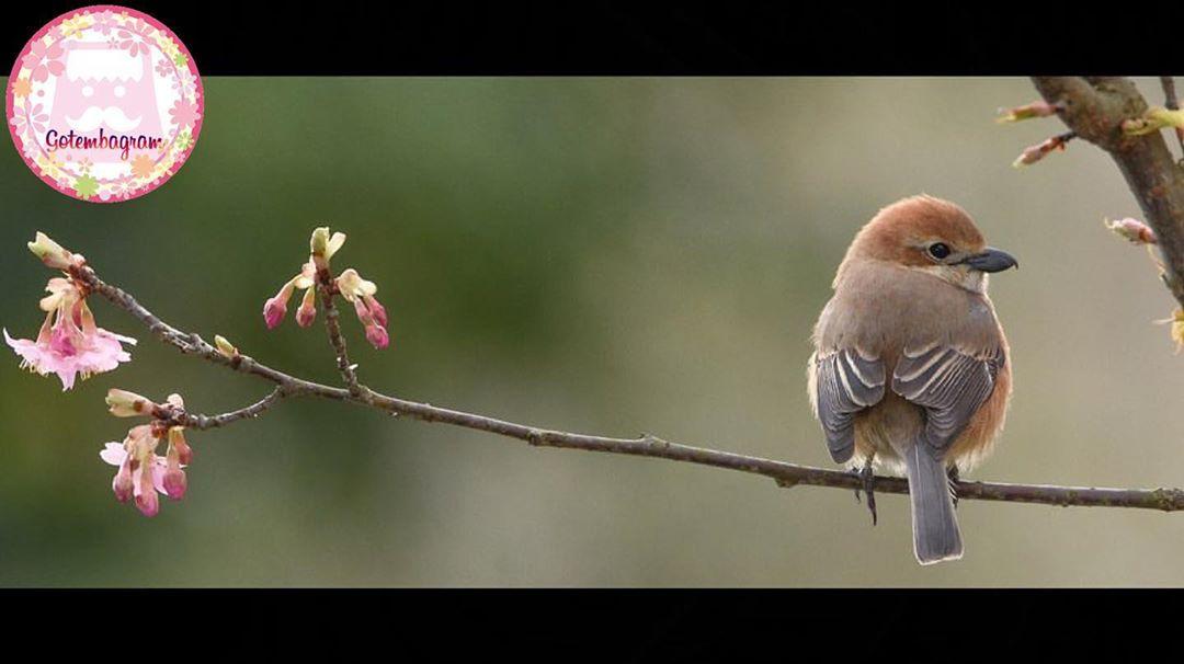 @tosky_h.y_birdさん