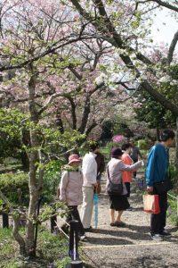 4月7日 御殿場桜まつり<br>2013.04.11 掲載